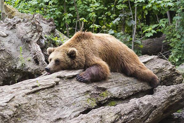Bear Tours Chinitna Bay
