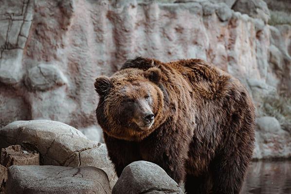 Chinitna Bay Bear Viewing