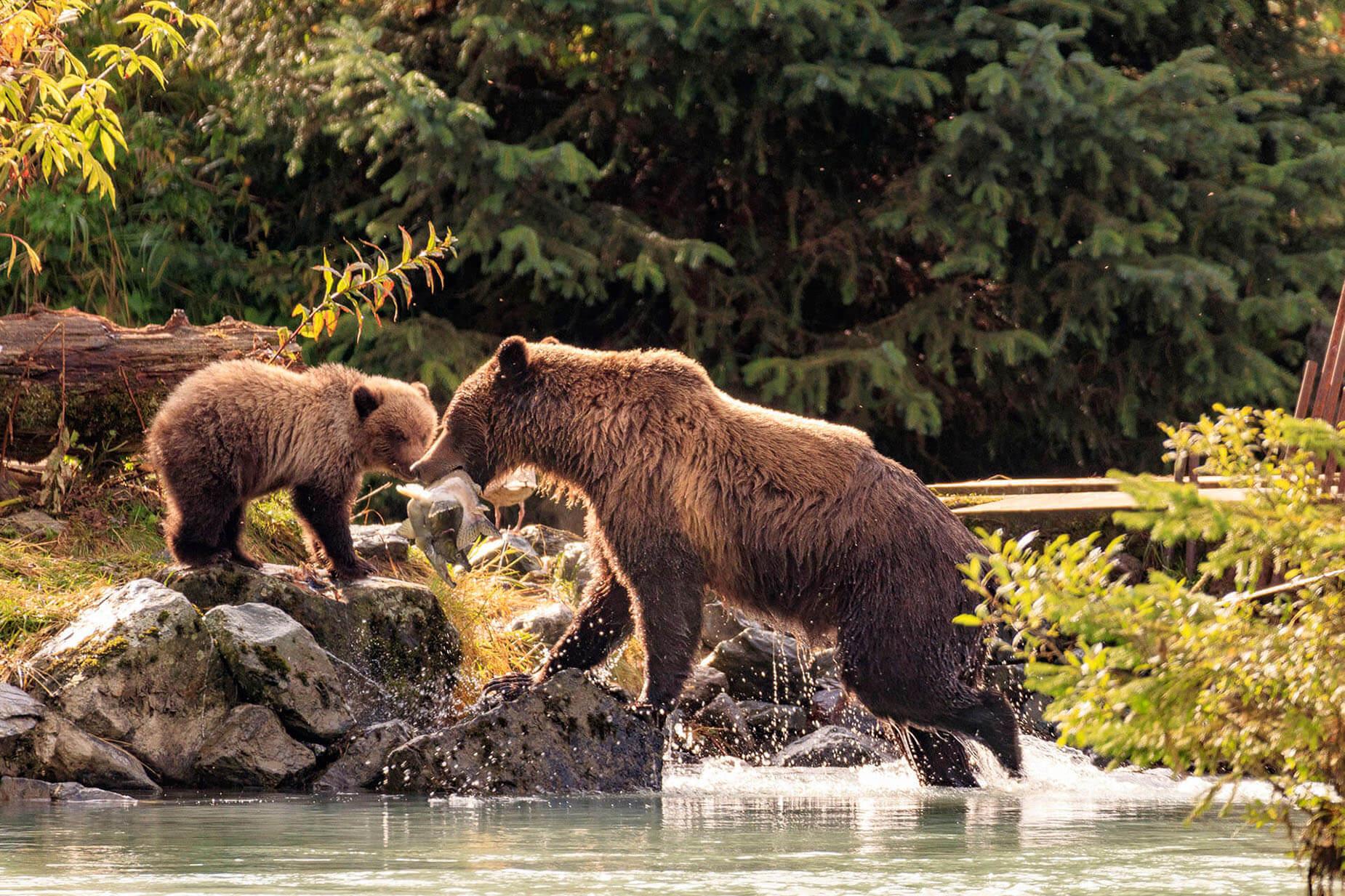 Bear Viewing Alaska slide 2
